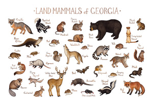 Georgia Land Mammals Field Guide Art Print