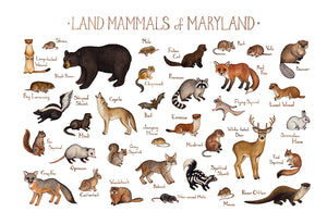 Maryland Land Mammals Field Guide Art Print