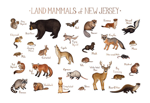 New Jersey Land Mammals Field Guide Art Print