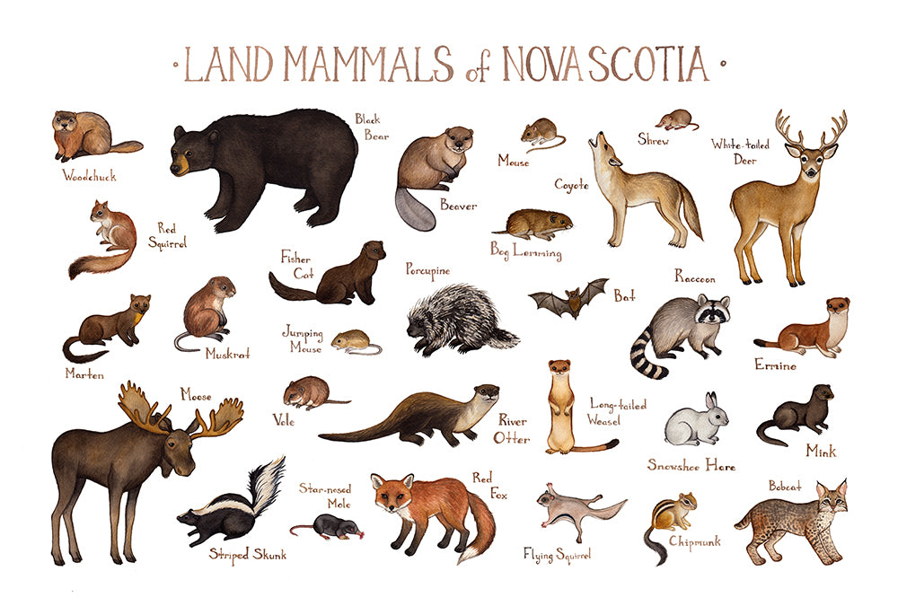 Nova Scotia Land Mammals Field Guide Art Print