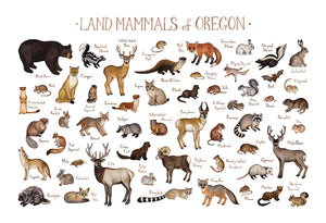 Oregon Land Mammals Field Guide Art Print
