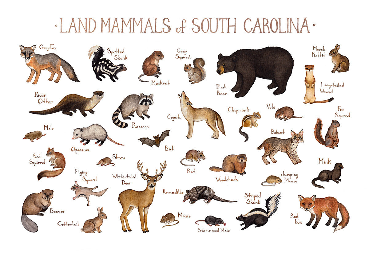 South Carolina Land Mammals Field Guide Art Print