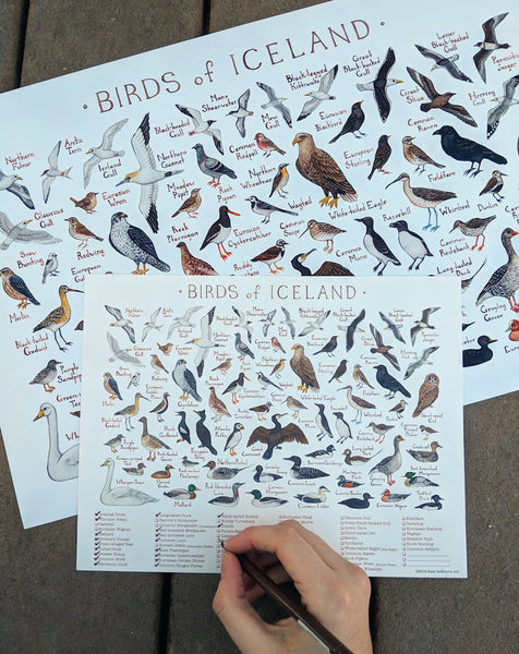 Icelandic Birds Field Guide Art Print and Checklist