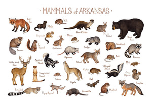 Arkansas Land Mammals Field Guide Art Print