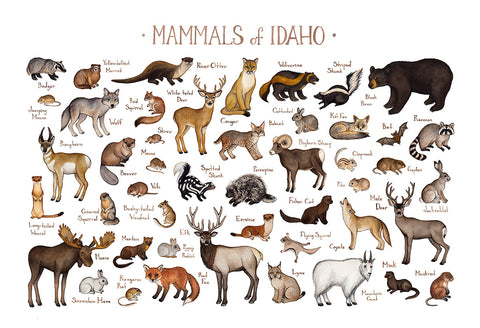 Idaho Mammals Field Guide Art Print