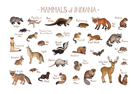 Indiana Mammals Field Guide Art Print