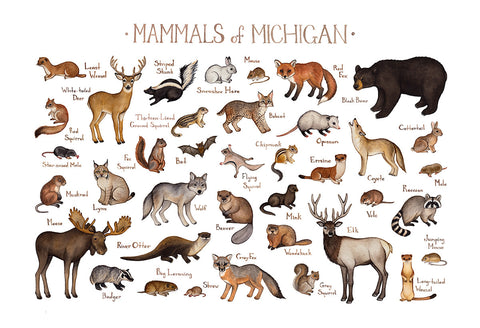 Michigan Mammals Field Guide Art Print