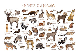Nevada Mammals Field Guide Art Print