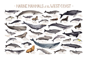 Wholesale Marine Mammals Field Guide Art Print: West Coast
