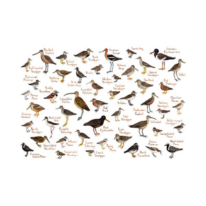 Wholesale Field Guide Art Print: Shorebirds of North America