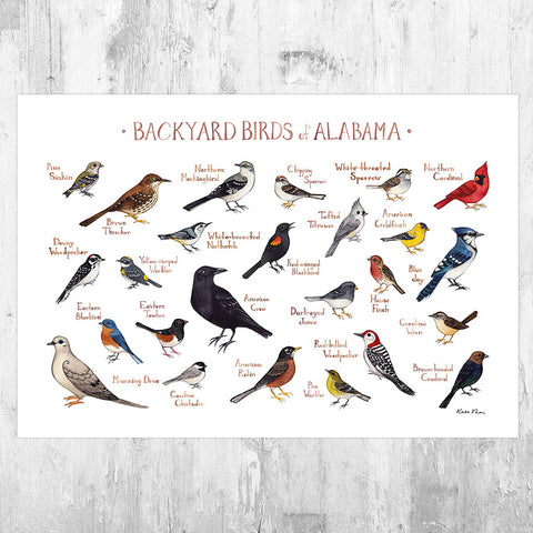 Alabama Backyard Birds Field Guide Art Print