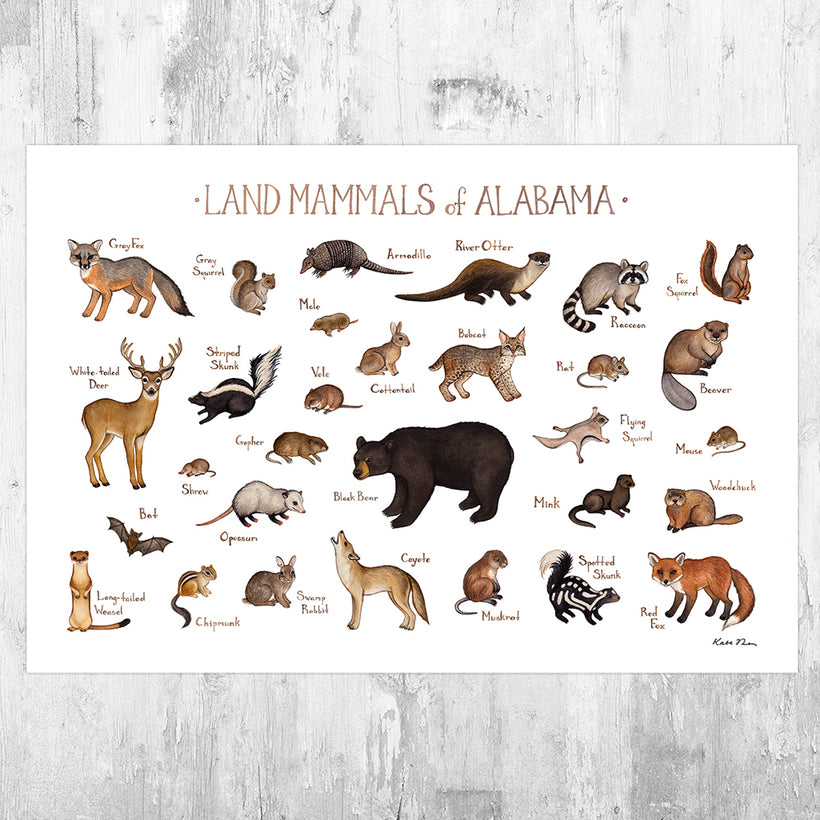 Mammals of the US and Canada Prints