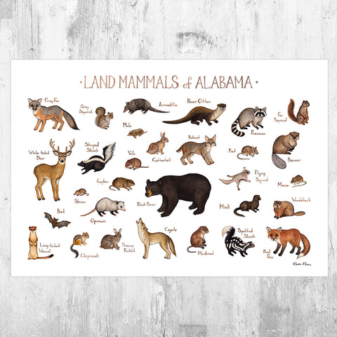 Alabama Land Mammals Field Guide Art Print