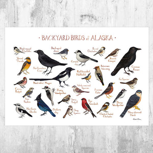 Alaska Backyard Birds Field Guide Art Print