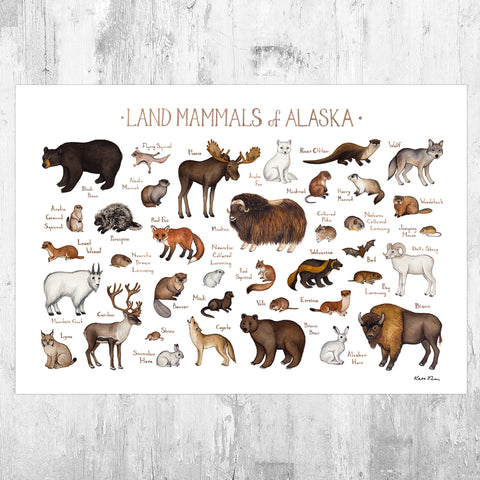 Alaska Land Mammals Field Guide Art Print