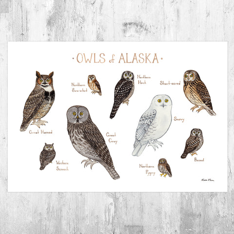 Alaska Owls Field Guide Art Print