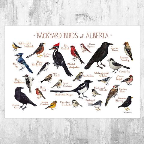 Alberta Backyard Birds Field Guide Art Print