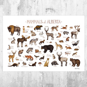 Wholesale Mammals Field Guide Art Print: Alberta