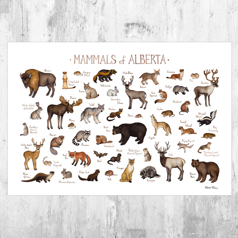 Mammals of Canada Prints