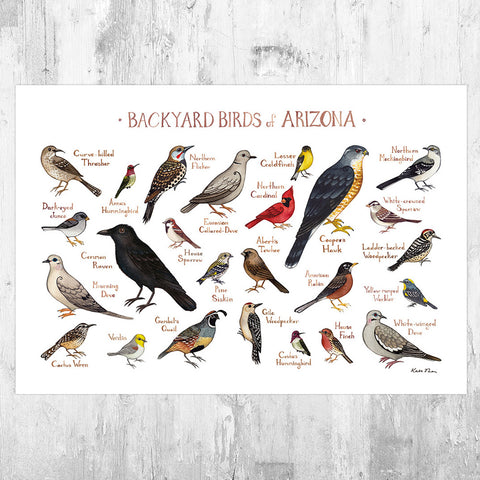 Arizona Backyard Birds Field Guide Art Print