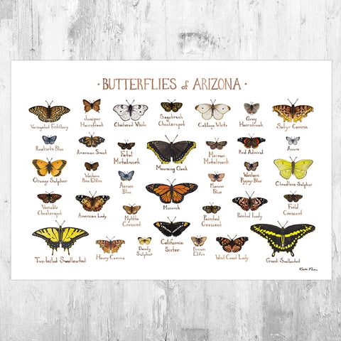 Arizona Butterflies Field Guide Art Print