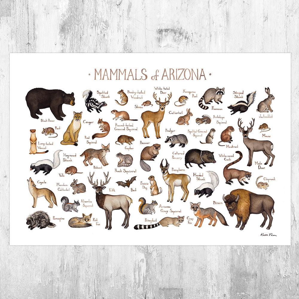 Arizona Mammals Field Guide Art Print