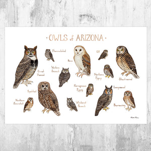 Arizona Owls Field Guide Art Print