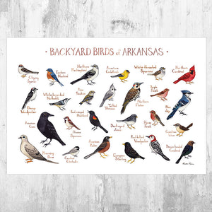 Arkansas Backyard Birds Field Guide Art Print