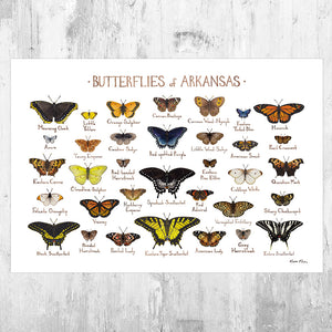 Arkansas Butterflies Field Guide Art Print