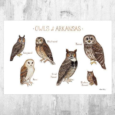 Arkansas Owls Field Guide Art Print