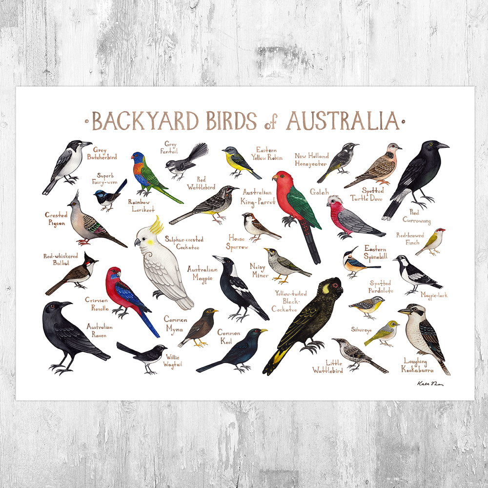 Australia Backyard Birds Field Guide Art Print