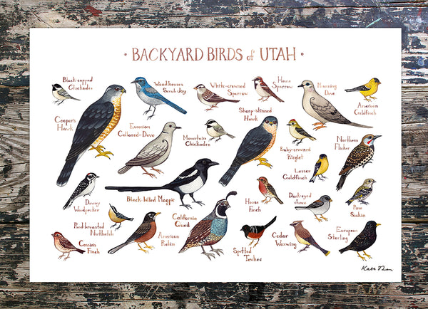 Wholesale Backyard Birds Field Guide Art Print: Utah