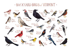 Wholesale Backyard Birds Field Guide Art Print: Vermont