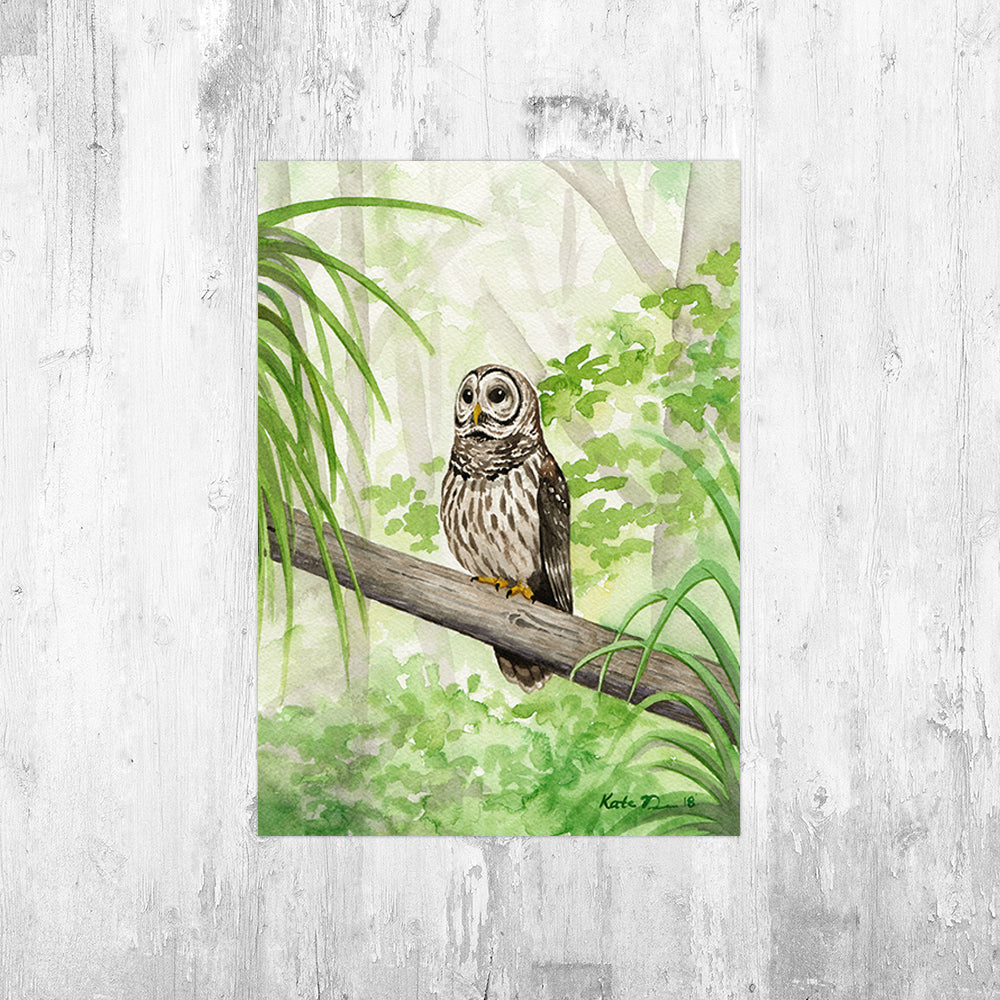 Barred Owl Art Print