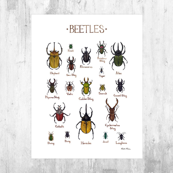 Beetles Field Guide Art Print