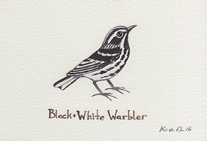 Black and White Warbler Painting