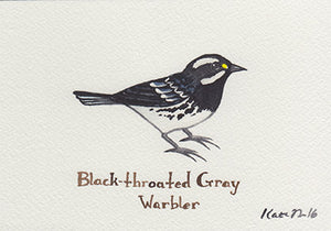 Black-throated Gray Warbler Painting