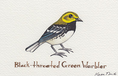 Black-throated Green Warbler Painting