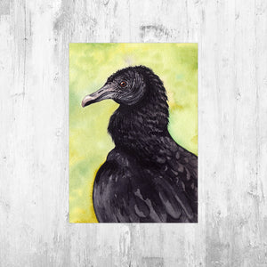 Black Vulture Art Print
