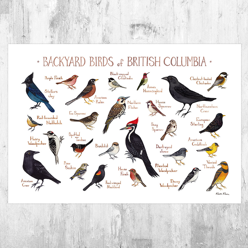 British Columbia Backyard Birds Field Guide Art Print