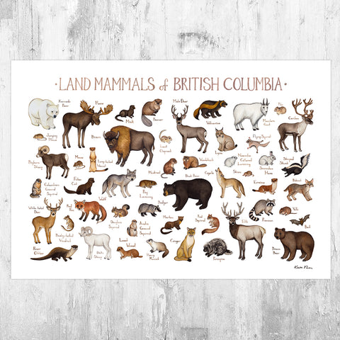British Columbia Land Mammals Field Guide Art Print