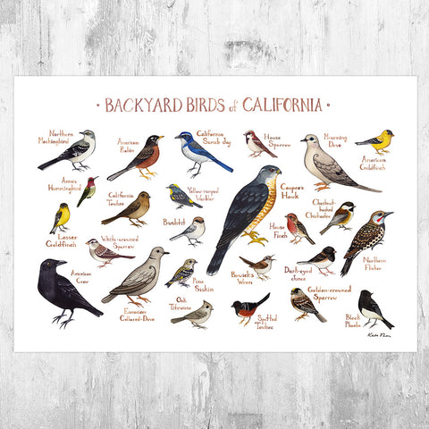 California Backyard Birds Field Guide Art Print