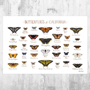 California Butterflies Field Guide Art Print