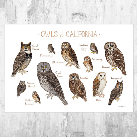 California Owls Field Guide Art Print