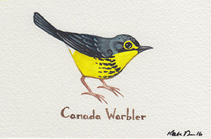Canada Warbler Painting