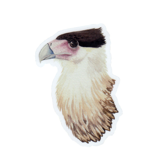 Crested Caracara Vinyl Sticker