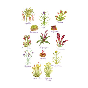 Carnivorous Plants Field Guide Art Print