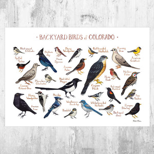 Colorado Backyard Birds Field Guide Art Print