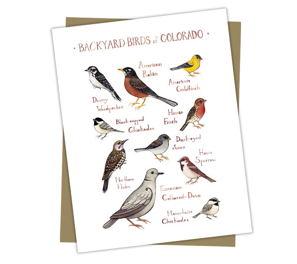 Wholesale Backyard Birds Field Guide Cards: Colorado