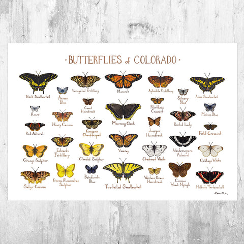 Colorado Butterflies Field Guide Art Print